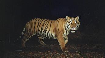 Positive til tigere i nabolaget