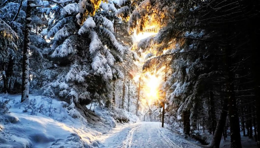 Vintersola kan være svært vakker. Men er det for lite av den?  (Foto: Dignity 100 / Shutterstock / NTB scanpix)