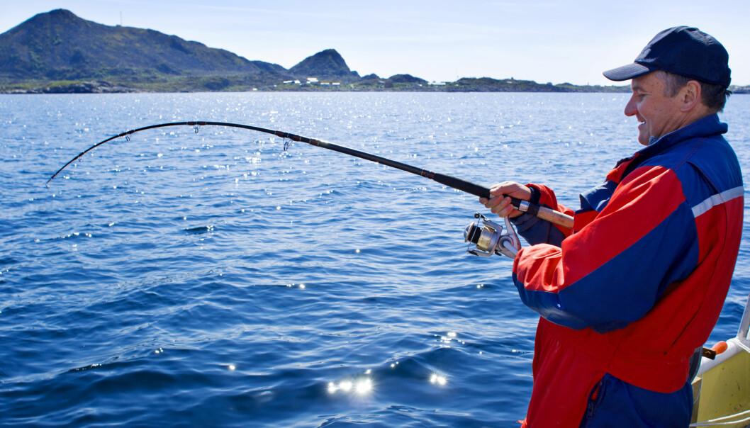 Fiskere som slipper fisken ut igjen, tror den klarer seg bra. Men det har de jo egentlig ikke forutsetninger for å vite. Så hvordan går det egentlig med kveiten etter at den er forsvunnet ned igjen i dypet? (Illustrasjonsfoto: Colourbox)