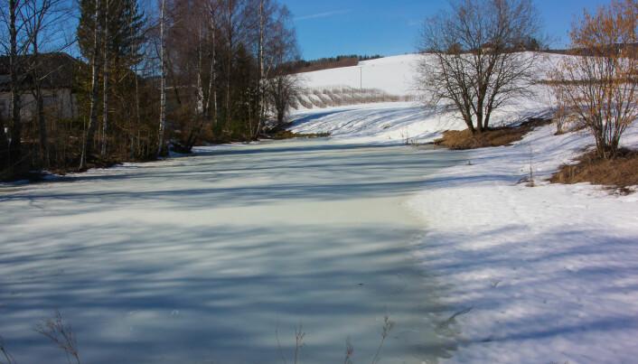 Vivelstaddammen i Lier 27. mars 2019, samme dag som første individ ble registrert på dataloggeren. Det er kun i innløpsoset det er litt åpent vann. Foto: Børre K. Dervo / NINA.