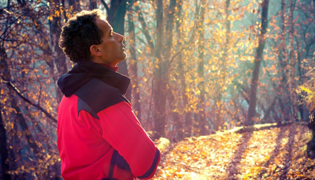 Forskere hevder å ha funnet den mest effektive lengden ute i naturen for å stresse ned. Foto: ueuaphoto, Shutterstock, NTB scanpix
