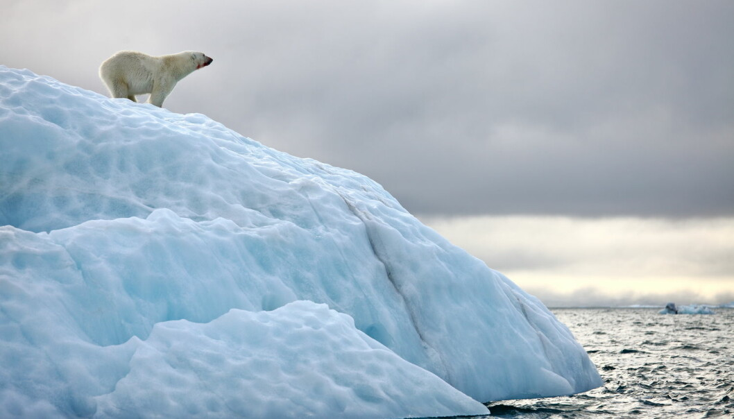 Er vi virkelig i ferd med å utrydde to tredeler av verdens dyr?