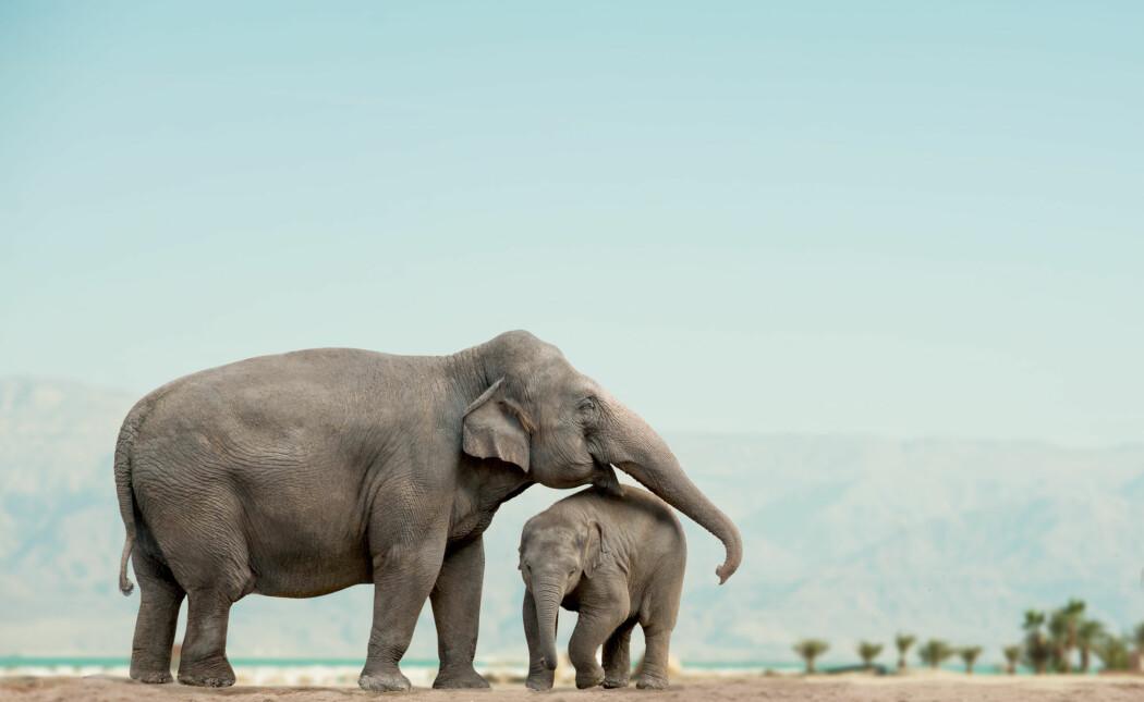 Spesielt i Asia og Nord- og Sør-Amerika er mange dyrearter truet på grunn av overhøsting. (Foto: mariait, Shutterstock, NTB scanpix)