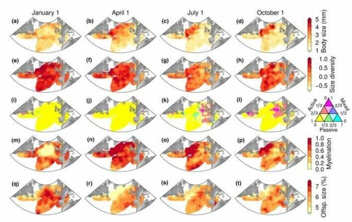 Her er noen av de kartene over hoppekreps som forskerne har utarbeidet. De er basert på trekk som kroppsstørrelse, mangfold i kroppsstørrelse, mat og størrelsen på avkom. (Foto: (Illustrasjon: Fra den vitenskapelige artikkelen))