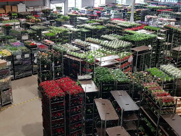 Hageplanter er big business, tusenvis av tonn importeres hvert år! (Foto: Anders Endrestøl)