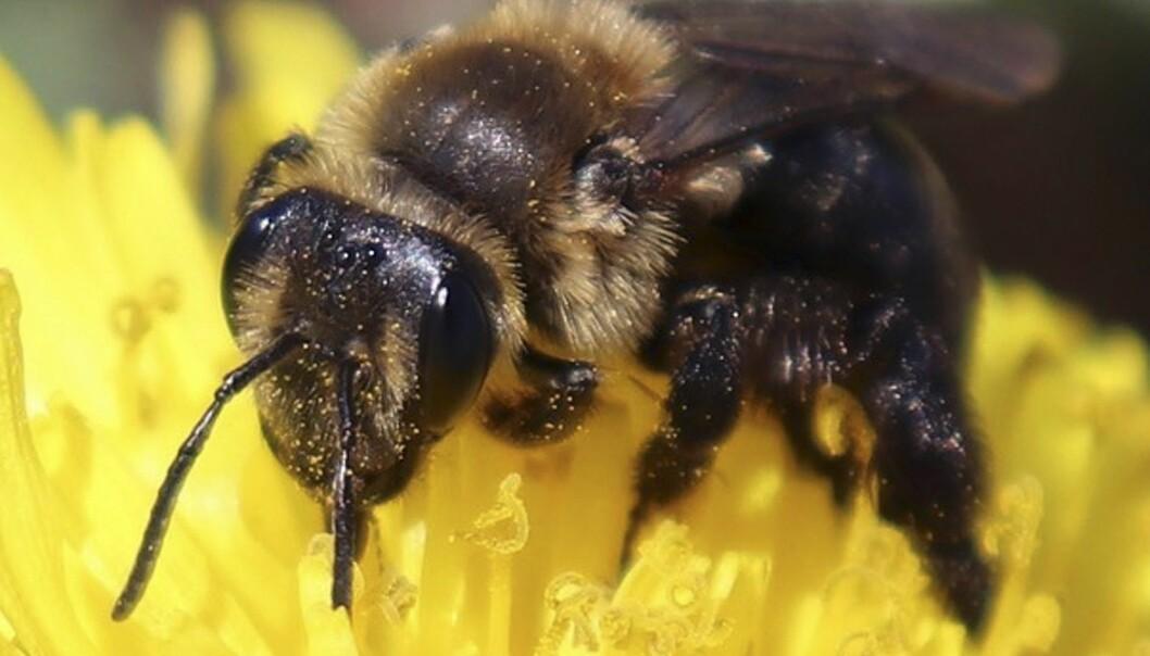 Forskere anslår at planeten vår i dag huser rundt åtte millioner forskjellige arter, de fleste av dem er insekter. (Illustrasjonsfoto: University of New Hampshire, Molly Jacobson via AP, NTB scanpix)
