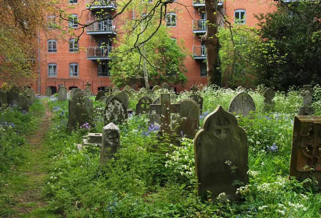 Stadig flere sentrumsnære gravplasser ser seg nødt til å utvide, blant annet på grunn av økt pågang og manglende nedbrytning i eksisterende kistegraver. (Illustrasjonsfoto: Kathrine Torday Gulden)