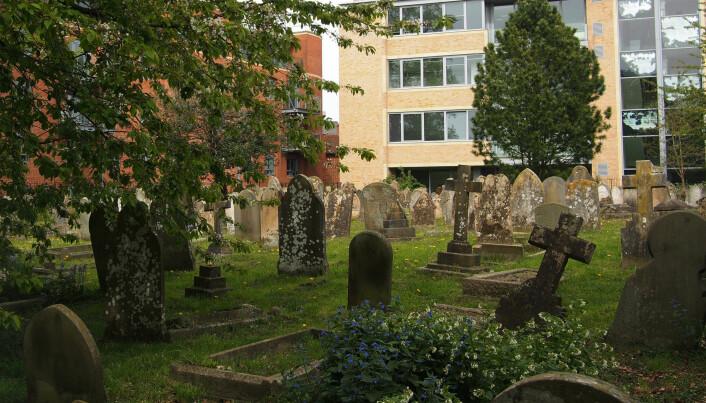 Gravlegging er er en gammel skikk, men det finnes ikke særlig mye forskning på gravjord. (Foto: Kathrine Torday Gulden)