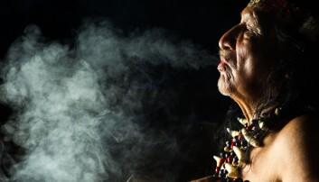 Ayahuasca i Amazonas: Fortellinger om jungelen som et uendelig skattkammer