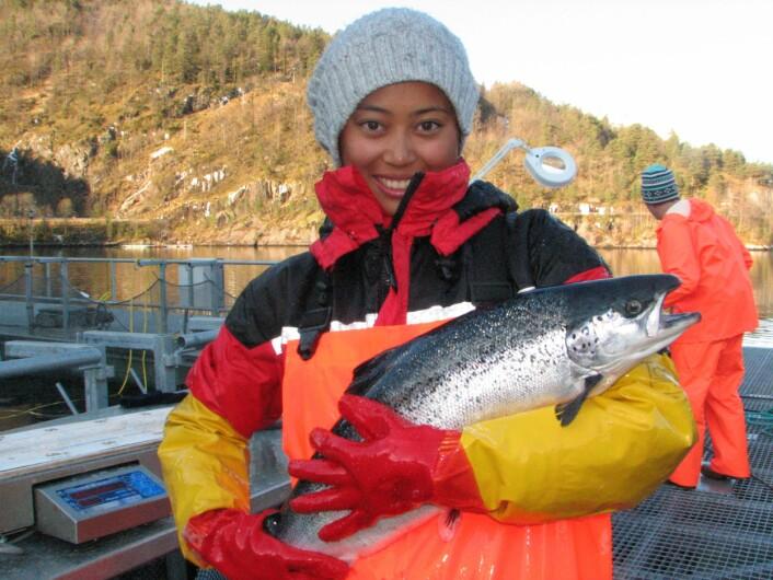 Samantha Bui forsker på laksens egen flukt fra lakselusa. (Foto: Havforskningsinstituttet)