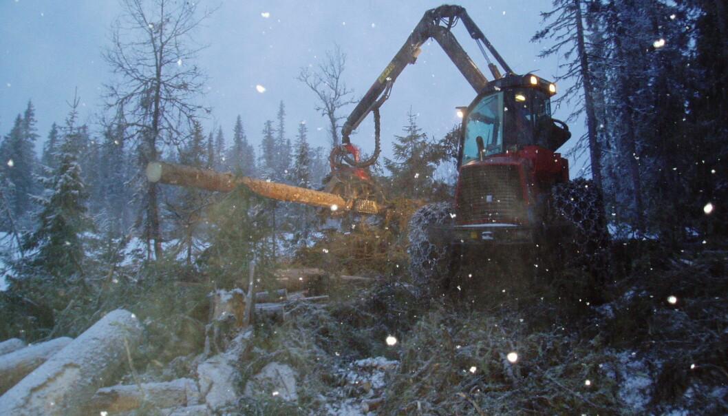 Kapitalkreftene gjør at de som hogger og kjører fram tømmer i norske skoger kommer i skvis mellom det å ta miljøhensyn og krav til produktivitet og lave priser, skriver kronikkforfatteren. (Foto: Leif Kjøstelsen / NIBIO)