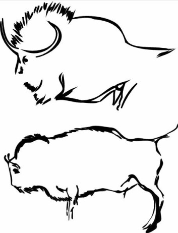 Eksempel på de to typene bison som går igjen i hulemaleriene. Øverst en steppebison-lignende figur fra Lascaux-hula i Frankrike. Nederst en visent-aktig type fra Pergouset-hula i Frankrike. (Foto: (Illustrasjon: Soubier m. fl.))