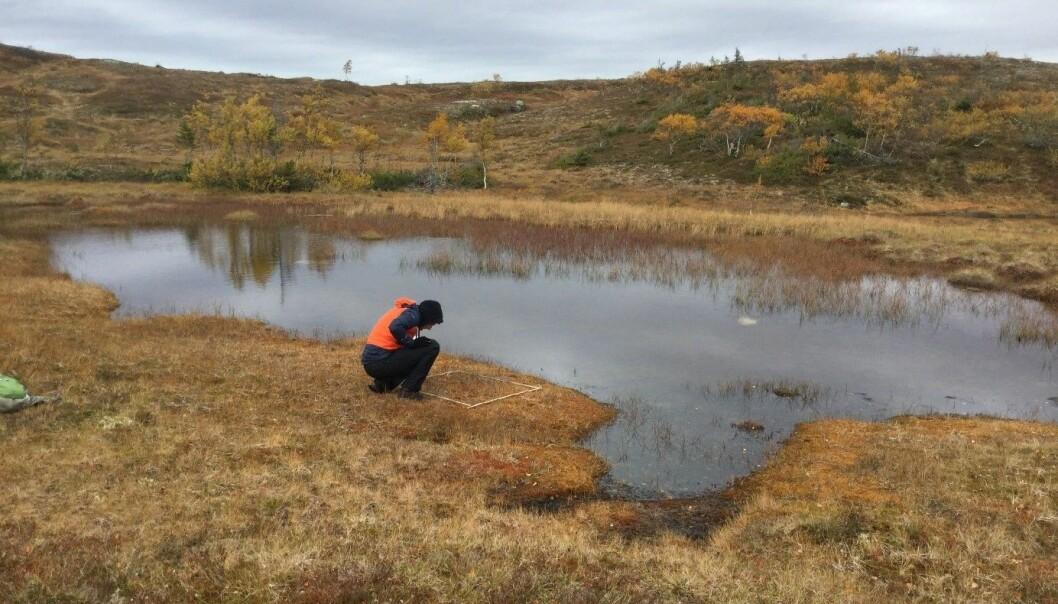 Her undersøkes en kvadratmeter myr i Nord-Trøndelag. Hvordan kommer det til å se ut her om to år? Om fem år? Foto: Lise Tingstad.