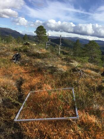 Denne kvadratmeteren er i nærheten av Vikna. På en dag som denne er feltlivet helt ok! Foto: Lise Tingstad.