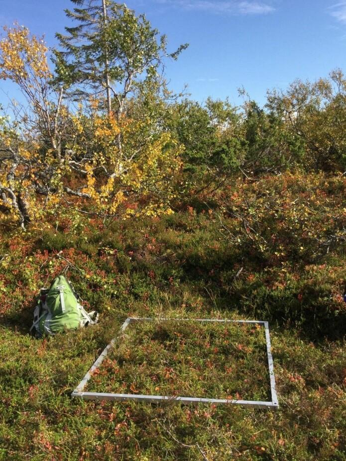 Det rakk å bli høst før vi nådde Lierne. Foto: Lise Tingstad.