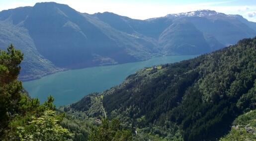 Mye mer miljøgifter i fjordene enn i havet