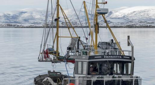 Reketråling i Tanafjorden og Porsangen kan bli tillatt igjen. Hvordan vil det påvirke livet i havet?
