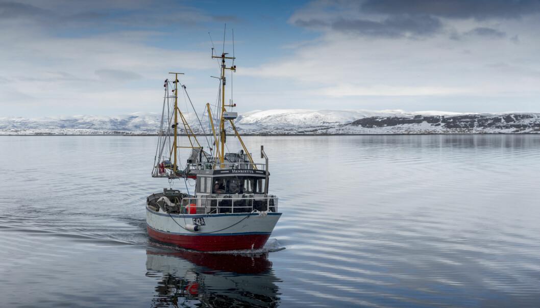 «Henriette» har drevet prøvefiske med teiner for rekeprosjektet på Porsangen, Tanafjorden og Kvænangen. (Foto: Gunnar Sætra / Havforskningsinstituttet)