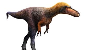 Her er mini-stamfaren til Tyrannosaurus Rex