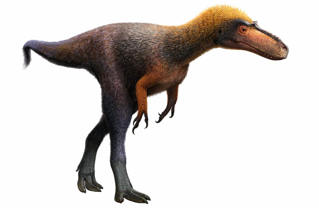 Dette er Suskityrannus hazelae, som skal ha levd for mer enn 92 millioner år siden i dagens New Mexico. Dette er en kunstners framstilling. (Bilde: Andrey Atuchin)