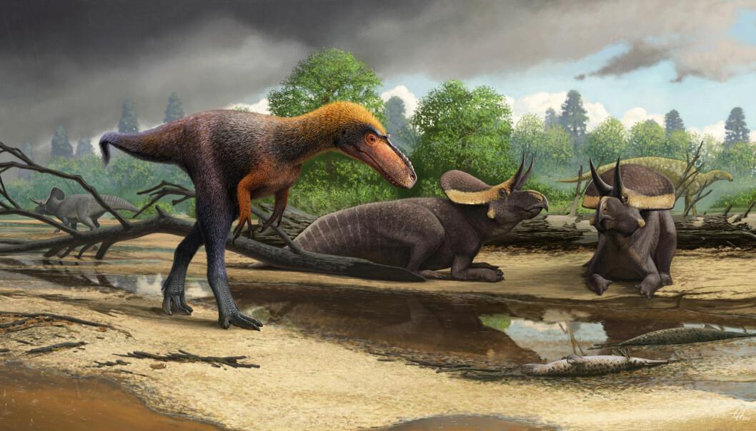 Her er dyret sett sammen med Zuniceratops. (Bilde: Andrey Atuchin)