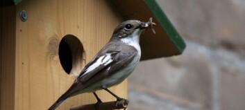 Se flua gjennom fuglens lynraske øyne!