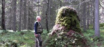 Er dette Norges høyeste maurtue?