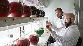 Skal finne ut hvor skadelig mikroplast er