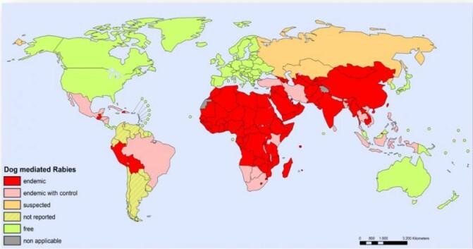 På kartet kan du se hvilke områder hvor hunder er hovedreservoaret og kilde til rabiessmitte (røde). Kilde: Rabies Bulletin Europe/WHO)