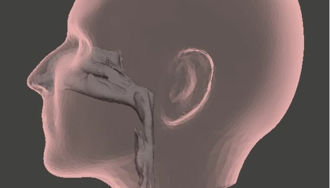 Den øvre luftveien, som strekker seg fra nesetippen og ned til øverst i brystet, har en komplisert geometrisk utforming. Foreløpig vet vi lite om hvordan de myke delene av luftveien påvirkes når vi puster.  (Illustrasjon: Sintef)