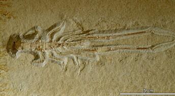 Forskeren forteller: Dødelig vann og eldgamle fossiler