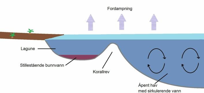 Slik så lagunesystemet ut. I bunnvannet har fossiliseringen oppstått. Inspirasjon hentet fra Barthel (1990) (Foto: (Illustrasjon: Håkon Muland Kenich))