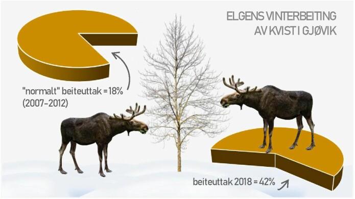 Effekt av en lang og snørik vinter 2017-2018 for elg i Sør-Norge: Beitetakster i Gjøvik kommune viser at elgene beitet bort mer enn dobbelt så mye av alle tilgjengelig fjorårsskudd på rogn, bjørk og Salix i forhold til tidligere år.