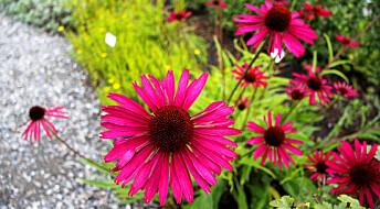 En ny planteorden inntar de botaniske hagene