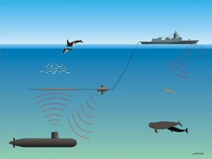 Militære sonarer som brukes til å lete etter andre staters ubåter, kan skape voldsomme reaksjoner hos nebbhvaler. Kanskje de tror at lyden kommer fra spekkhoggere, som er topp-predator i havet. (Illustrasjon: Forsvarets forskningsinstitutt,FFI)