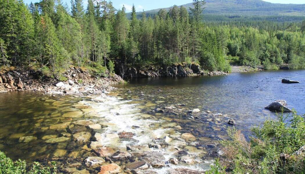 Her er en terskel i elva Nea. Den er bygd opp for å demme opp vannet. (Foto: Juliet Landrø/HydroCen)