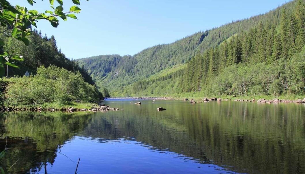 Tersklene fører til store vannspeil i elva Nea. (Foto: Juliet Landrø/HydroCen)