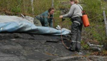 Ristningsfeltet Bardal 1B i Steinkjer kommune etanolbehandles og tildekkes i 2010. Foto: Eva Lindgaard, NTNU Vitenskapsmuseet