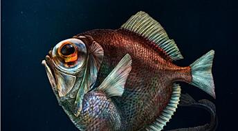 Dyphavsfisk kan trolig se farger i stummende mørke