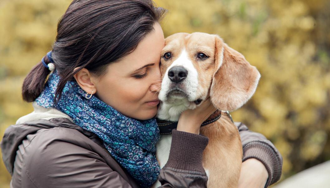 Er hundens ønske om å være sammen med mennesker styrt av genene? Å, ja. Svenske forskere har nå vist hvilke gener. (Illustrasjonsfoto: Soloviova Liudmyla, Shutterstock/NTB scanpix)