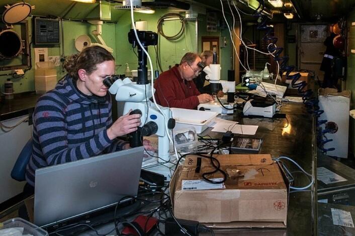 Havforskerne Aino Hosia, Tor Knutsen og Lars-Johan Naustvoll undersøker dyreplankton i mikroskopet. (Foto: Elvar H. Hallfredsson, Havforskningsinstituttet)