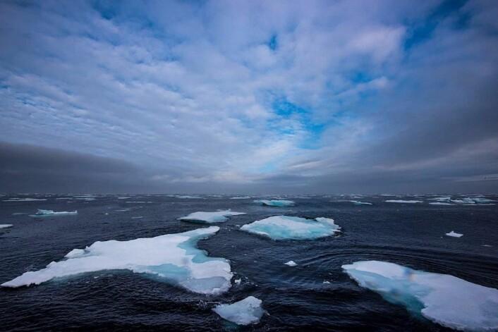 Under høstens Polhavstokt var det kjøligere overflatevann enn de to foregående årene, mens det var varmere vann fra 50 meter og nedover enn årene før. (Foto: Elvar H. Hallfredsson, Havforskningsinstituttet)