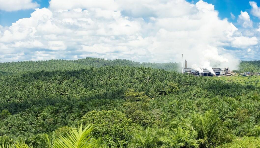 Forskerne har sett på avskoging og etablering av palmeoljeplantasjer på Borneo de siste 40 årene. Bilde er fra Sabah på øya Borneo. (Foto: Science Photo Library)