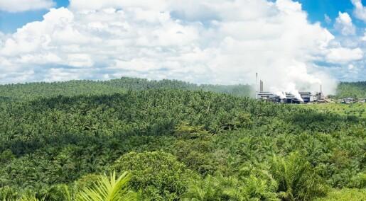 Produksjon av palmeolje kan være det beste alternativet