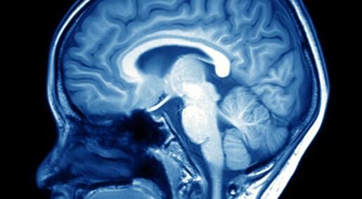 Forskere oppdager hjernemekanisme som regulerer kroppsvekten