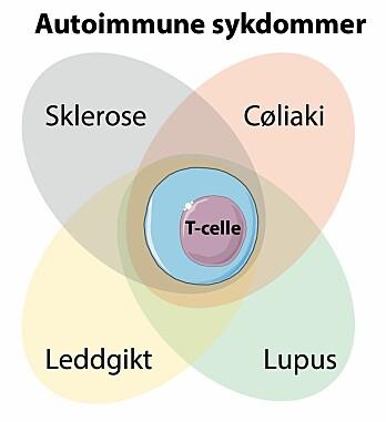 Forskerne fant T-cellen med den unike signaturen hos pasienter med andre typer autoimmune sykdommer. (Illustrasjon: SMART Servier Medical Art, modifisert av Asbjørn Christophersen)