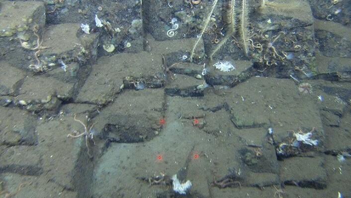"""Fig. 3. Toppen av berggrunnsryggen på 192 m vanndyp (""""B"""" på videolinjen). Bunnen består av utstikkende berggrunn. (Foto: Mareano / Havforskningsinstituttet)"""