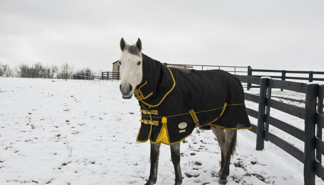 En ny studie viser at hester kan kommunisere med enkle symboler.  (Illustrasjonsfoto: Irina Mos / Shutterstock / NTB scanpix)