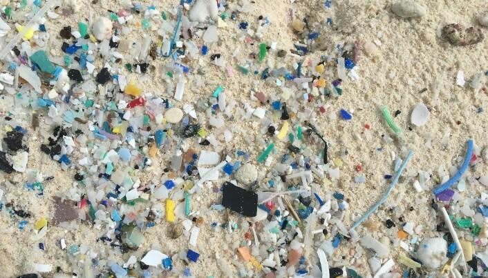 Mikroplastbiter mellom 1 og 5 mm i størrelse som er funnet i sanden på South-øya. (Bilde: Jennifer Lavers)