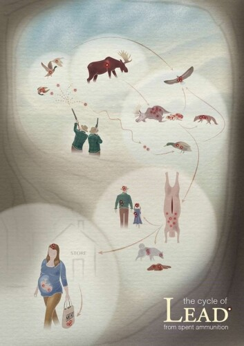 Bly fra ammunisjon forgifter mennesker, dyr og natur (Foto: (Illustrasjon: Diogo Guerra))